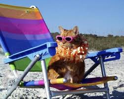 vacationcat1